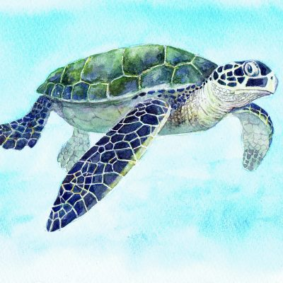Postcards for the Reef #2 – Green Turtle
